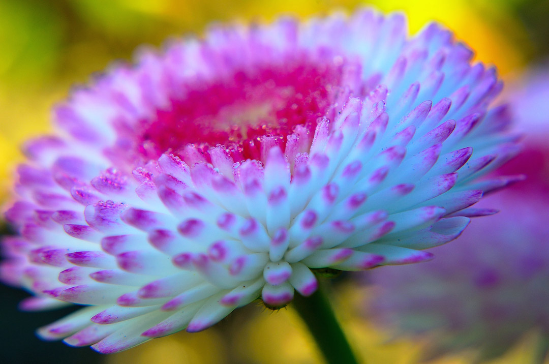 nice-flower-1332873694zxv-copy